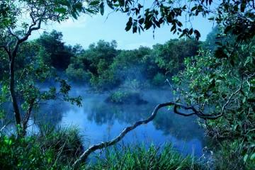 Khám phá không gian huyền bí của rừng quốc gia Bình Châu.