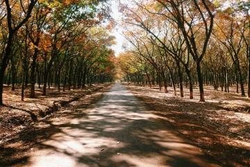 Điểm danh những địa điểm du lịch hot nhất Bình Phước