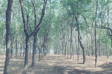Cẩm nang du lịch rừng cao su Bù Đăng Bình Phước