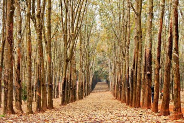 Mùa đẹp nhất trong năm để du lịch Đồng Nai