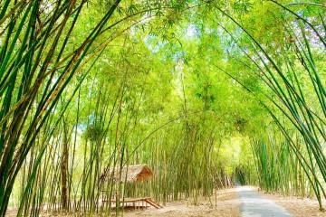 Tận hưởng vẻ yên bình ở con đường tre đẹp nhất Hậu Giang