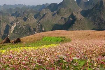 4 địa điểm ngắm hoa tam giác mạch đẹp nhất ở Hà Giang