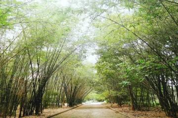 Làng tre Phú An - Xanh mát đầy vẻ tươi tắn