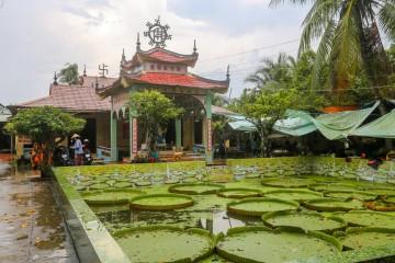 Khám phá ngôi chùa nổi tiếng Đồng Tháp có lá sen khổng lồ cõng được người