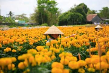 Mê mẩn trước vẻ đẹp rực rỡ của làng hoa Sa Đéc - Làng hoa lớn nhất miền Tây