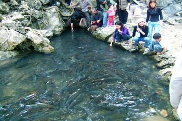 Nghe những câu chuyện kỳ thú về suối cá thần ở Thanh Hóa