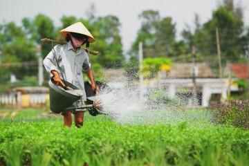 Làng rau Trà Quế - Điểm đến thú vị khi đến Quảng Nam