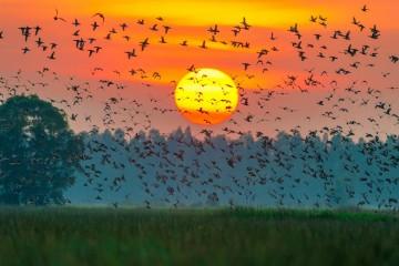 Lênh đênh trên xuồng tận hưởng cảnh sắc xinh đẹp của Vườn Quốc Gia Tràm Chim