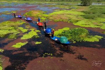 Vườn quốc gia U Minh Thượng - Trải nghiệm du lịch sinh thái khó quên