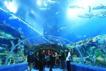 Du ngoạn đại dương cùng Viện Hải Dương học Nha Trang
