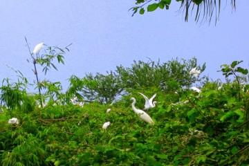 Vườn cò Bằng Lăng - Mang cả văn hóa sông nước trong cảnh sắc